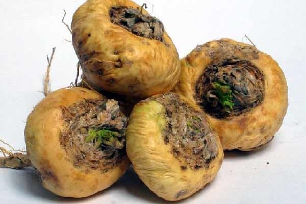 Nichel: gli alimenti che ne contengono di più e la sua funzione biologica