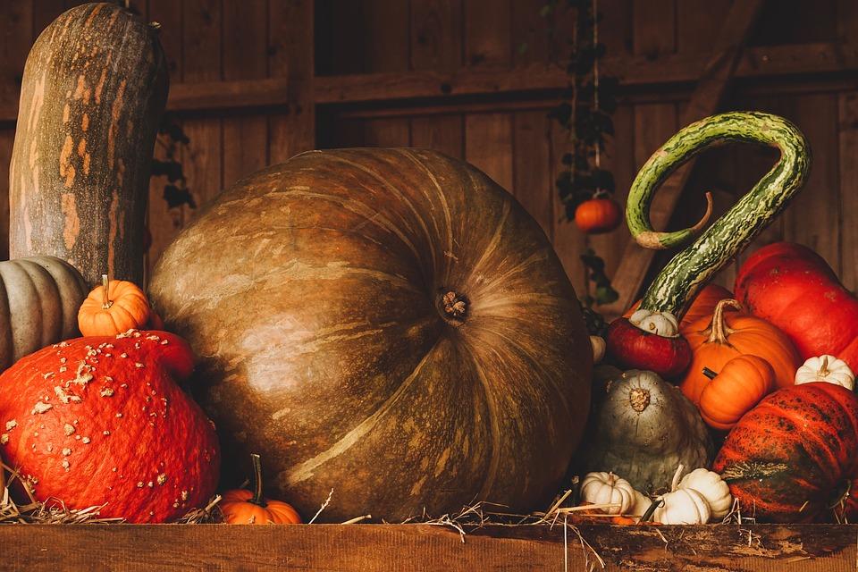 Arriva l'autunno e tornano le ricette con la zucca: ecco le migliori